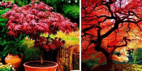 Продаются саженцы редких деревьев и кустарников  2
