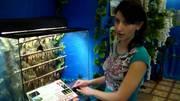 Высоко прпбыльный бизнес ферма Живых Ярких Бабочек  из Коста Рикки